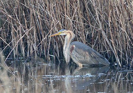 Suffolk Birding With Bins April 2009